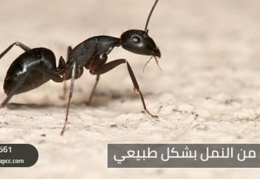 كيف يمكن التخلص من النمل بشكل طبيعي