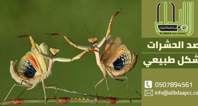 3 طرق لعملية صد الحشرات بشكل طبيعي