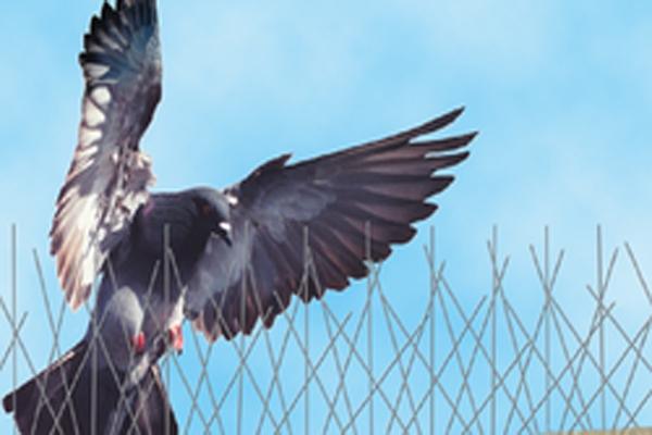 شركة مكافحة الطيور في ابوظبي